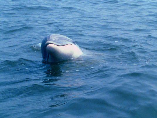 Conversa de golfinhos descodificada