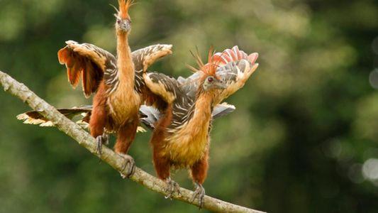 Estes Animais Defendem-se Através do Cheiro