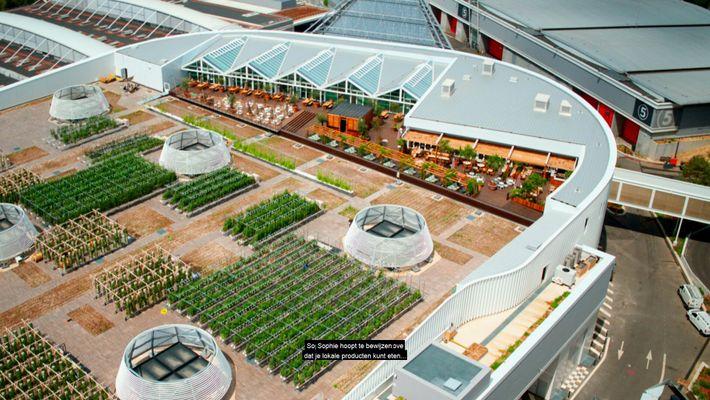 Veja a maior plantação urbana do mundo, num telhado.