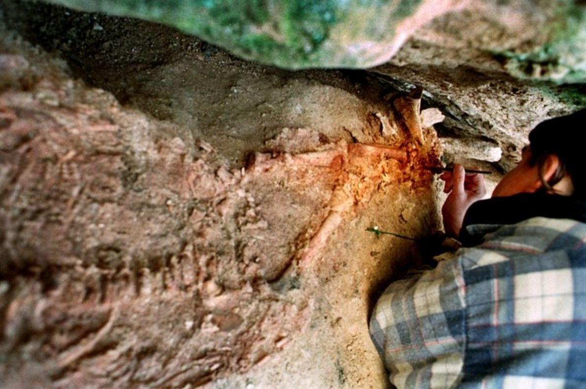 Arqueóloga escava o esqueleto do fóssil, ainda na sepultura