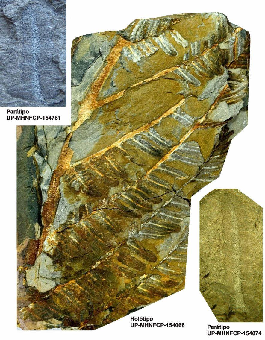 Três dos mais importantes espécimes fósseis