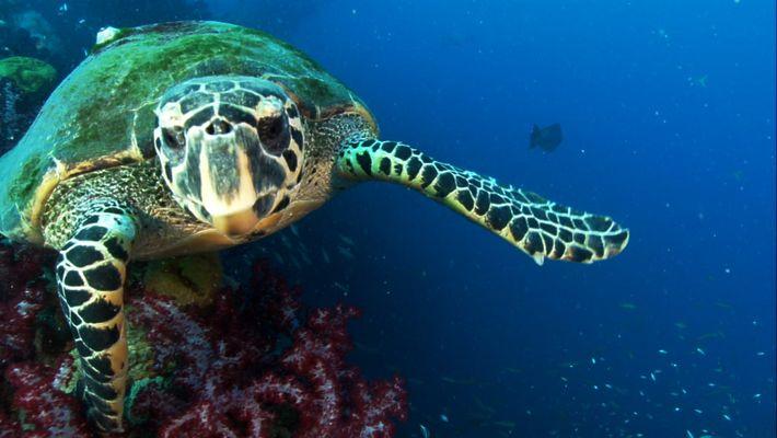 Descoberta Tartaruga do Mar Luminosa