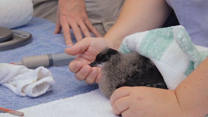 Pássaro Bebé em Risco é Resgatado e Devolvido ao Mar