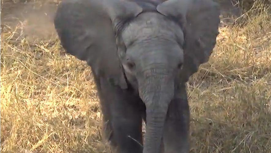 Veja: Não Brinque com Este Elefante.