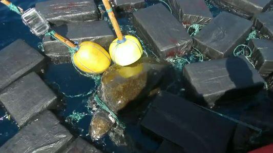 O Improvável Salvamento de Uma Tartaruga