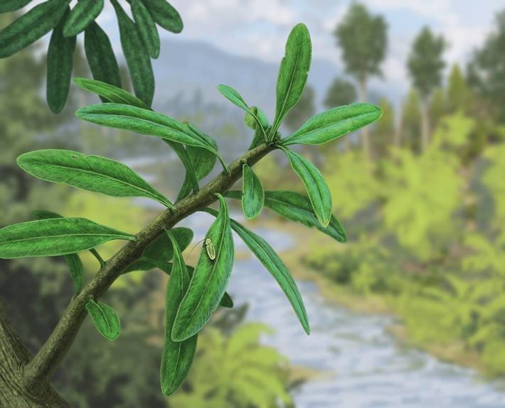 Uma primitiva 'barata parasitóide' sobre a folhagem da nova espécie Lesleya iberiensis.