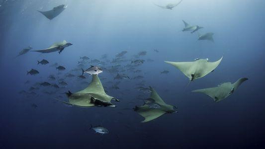 Imagens Extraordinárias de Gigantes Ameaçados nos Açores