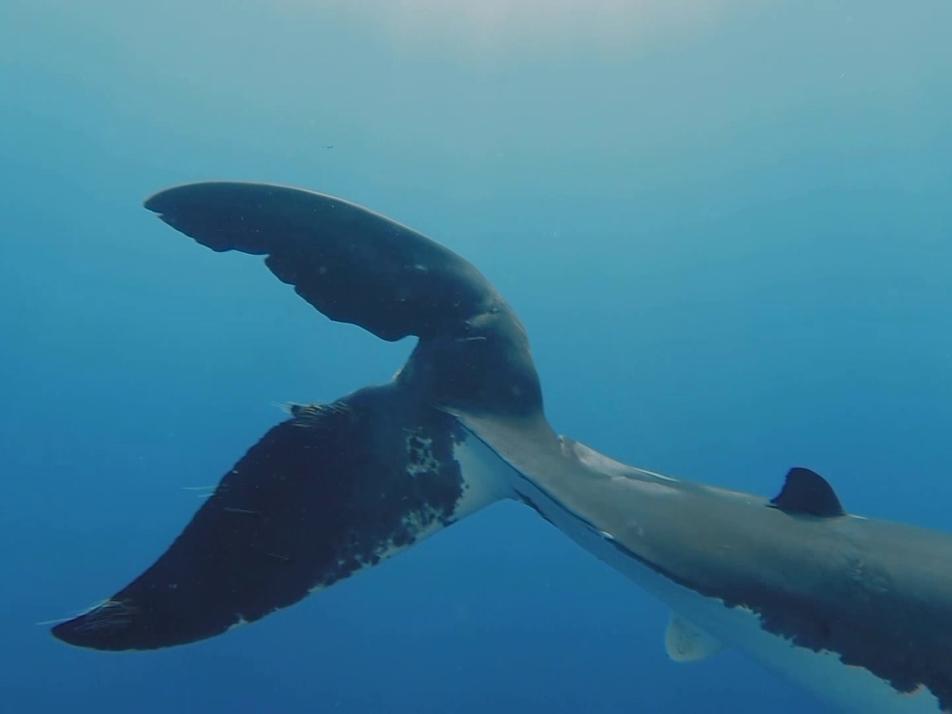 """""""À Procura de Nemo""""   Most Wanted Sharks"""