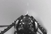 Formigas Monstruosas Atacam Presas