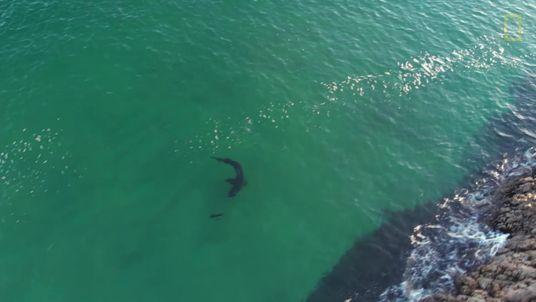 Encontros Desafiantes Entre Focas e Tubarões