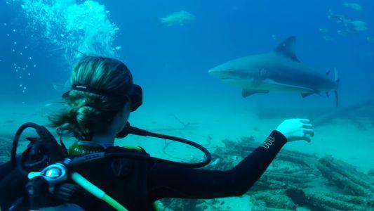Mergulhar Por Um Mundo Que Merece Ser Protegido