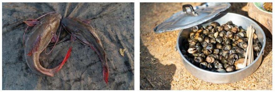 Esquerda: Peixe fresco acabado de apanhar, à venda no mercado diário no Laos. Direita: Uma panela com ...