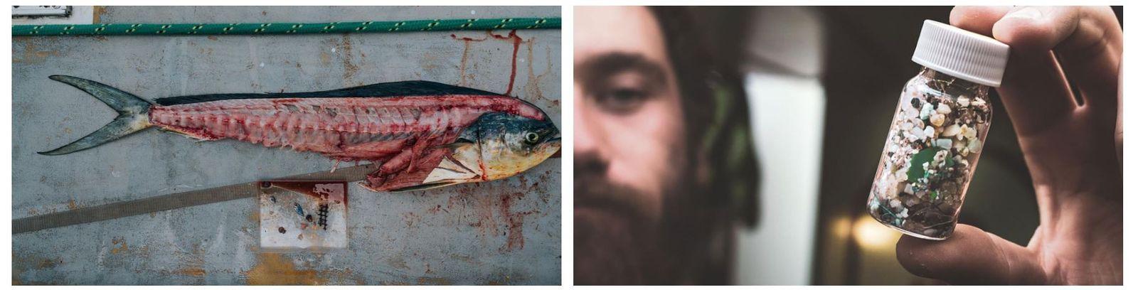 Esquerda: A equipa recolhe amostras dos peixes que captura nas redes. O plástico ao lado deste ...