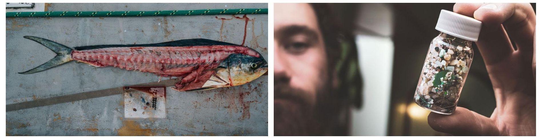 Esquerda: A equipa recolhe amostras dos peixes que captura nas redes. O plástico ao lado deste dourado-do-mar foi encontrado dentro do seu estômago. Direita: Um membro da equipa com um recipiente que tem 2.409 pedaços de plástico recolhidos da água em apenas 30 minutos.