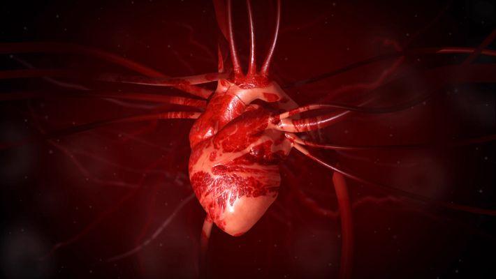 Factos sobre o Coração