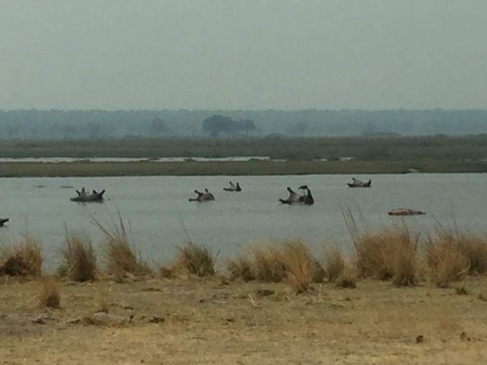 Hipopótamos Mortos na Namíbia