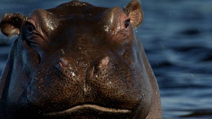Os Canais dos Hipopótamos