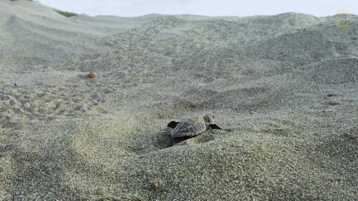Hostile Planet - Oceans - Turtles_PT_pt