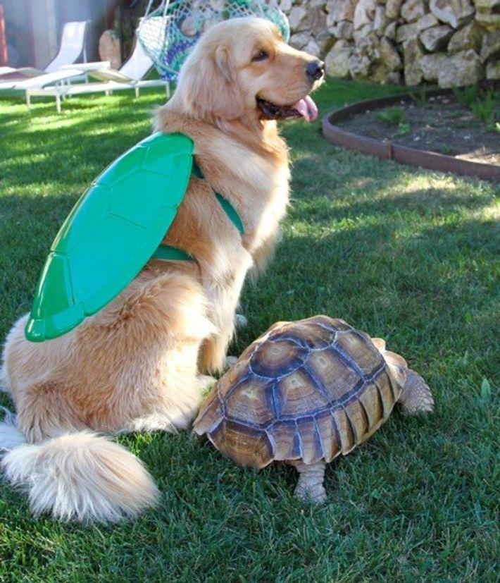 Uma tartaruga resgatada e um cão tornaram-se melhores amigos