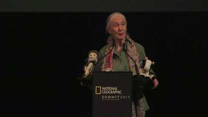 Jane Goodall Celebra 85 anos – a Vida da Mulher que Revolucionou o Estudo dos Chimpanzés ...