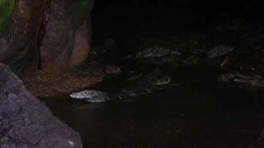Lagarto Nada em Lago com Fezes Para Devorar Morcego