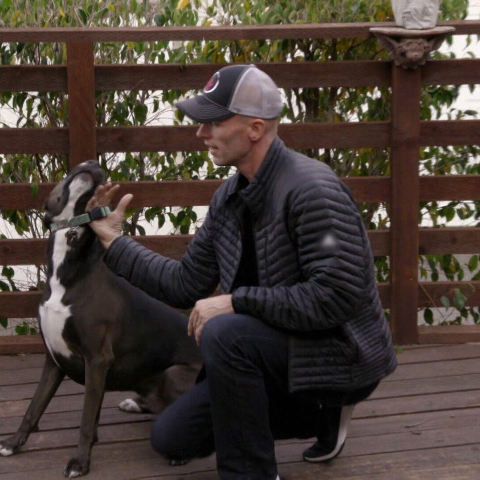 Como Reforçar os Comportamentos Caninos Saudáveis