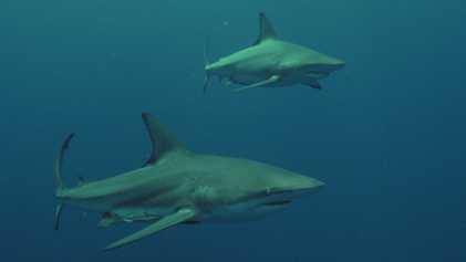 Leeanne Ericson   Shark Vs Surfer