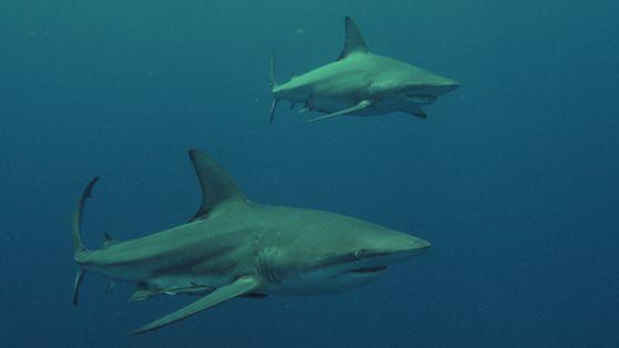 Leeanne Ericson | Shark Vs Surfer