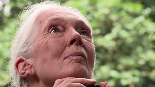 Jane Goodall: Antes e Agora