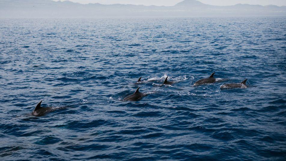 Os 7 locais mais bonitos para observar cetáceos em Portugal