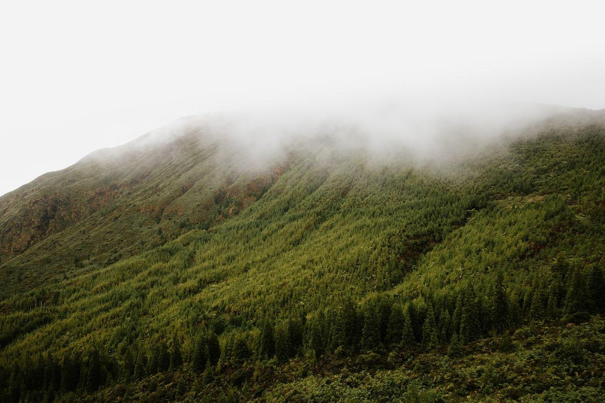 Fotografia do nevoeiro típico dos Açores