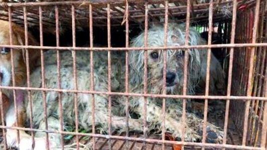 A Venda de Carne de Cão em Yulin Continua, Apesar da Proibição.