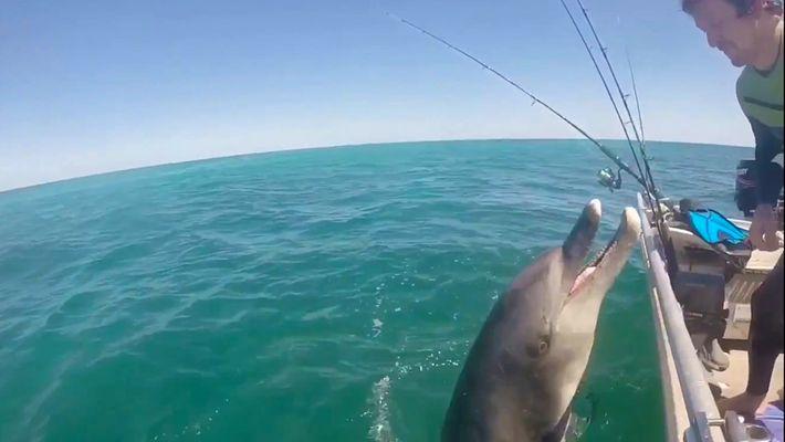 Um Golfinho Selvagem Surpreende os Tripulantes de um Barco