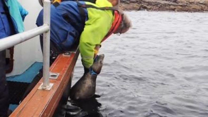 Foca Presa Em Linha de Pesca é Salva por Grupo