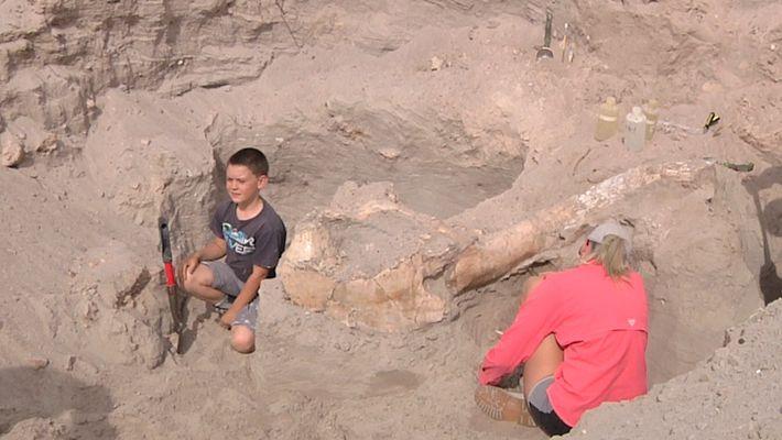 Como Tropeçar e Descobrir um Fóssil com um Milhão de Anos