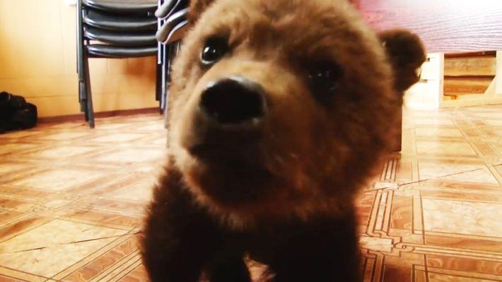 O Resgate de um Urso Bebé