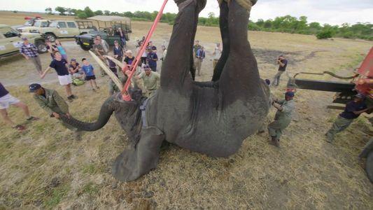 Como Transportar 500 Elefantes Durante 300 Quilómetros?