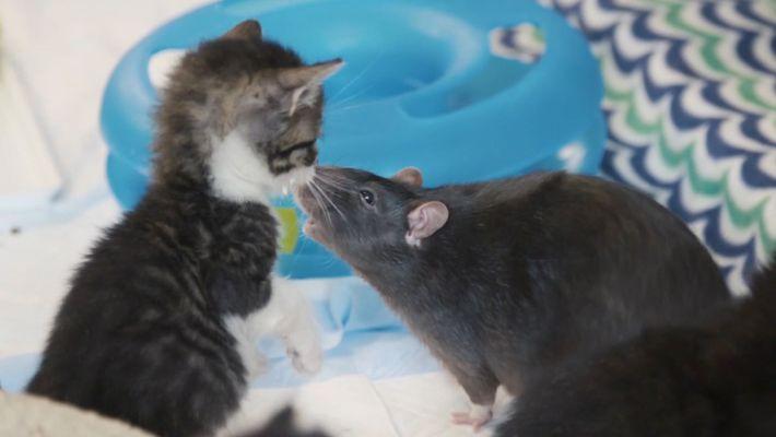 Veja: Este Gatos Têm a Companhia Mais Improvável