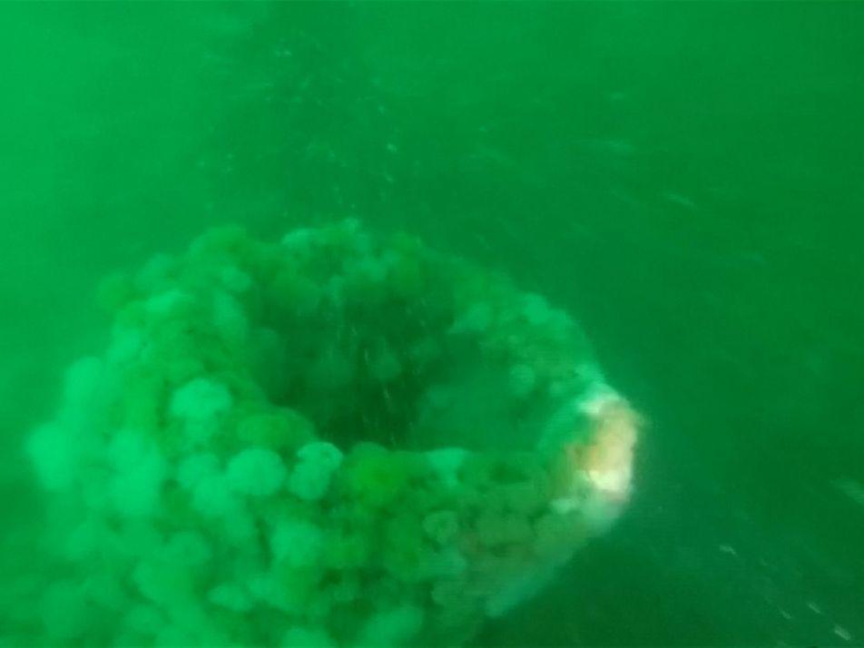 Veja o Submarino da Primeira Guerra Mundial Descoberto ao Largo da Costa da Bélgica