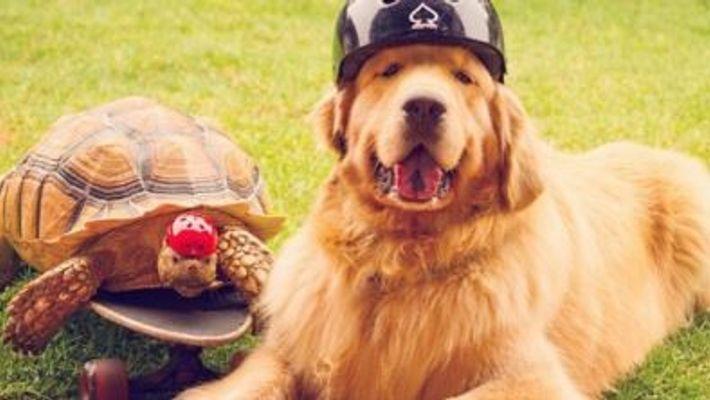 Larry, a tartaruga, e o seu melhor amigo improvável - Cricket, um cão