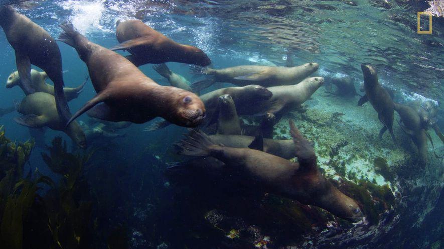 Três Novas Reservas Marítimas Para Proteger Uma Biodiversidade Magnífica
