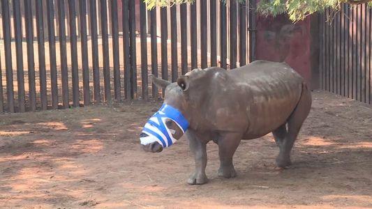 Diplomatas da Coreia do Norte Acusados de Contrabando de Marfim e Cornos de Rinoceronte