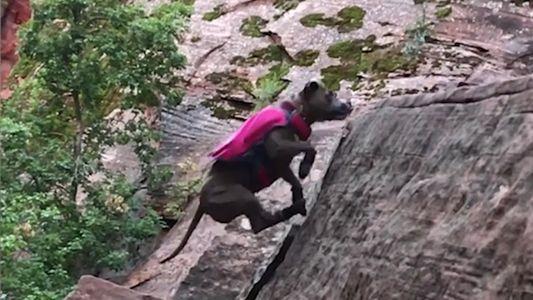 Este Cão Resgatado É Um Ávido Alpinista