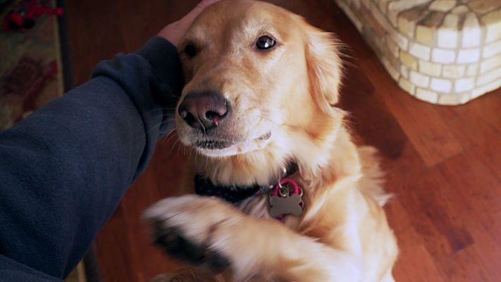 Será o Seu Cão Capaz de o Trocar?