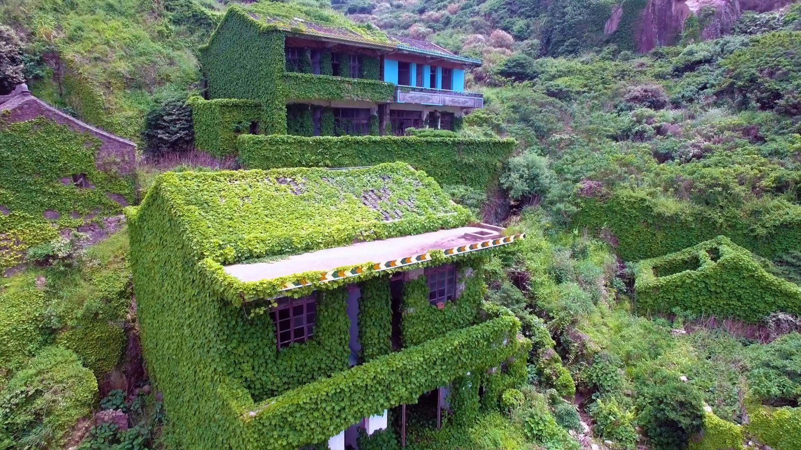 """Vila """"engolida"""" por vegetação"""