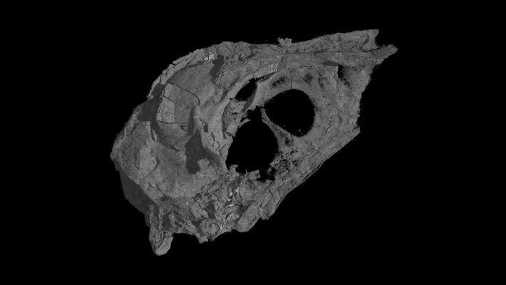 Descoberto Um Pássaro da Era dos Dinossauros Com o Crânio Intacto