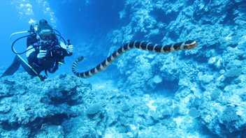 O que é Preciso Para Guardar Um Santuário de Tubarões?