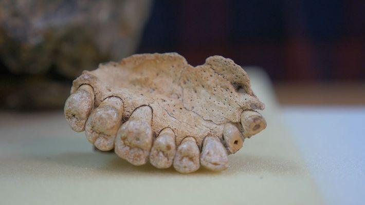 Fóssil Humano Extremamente Antigo Descoberto em Israel