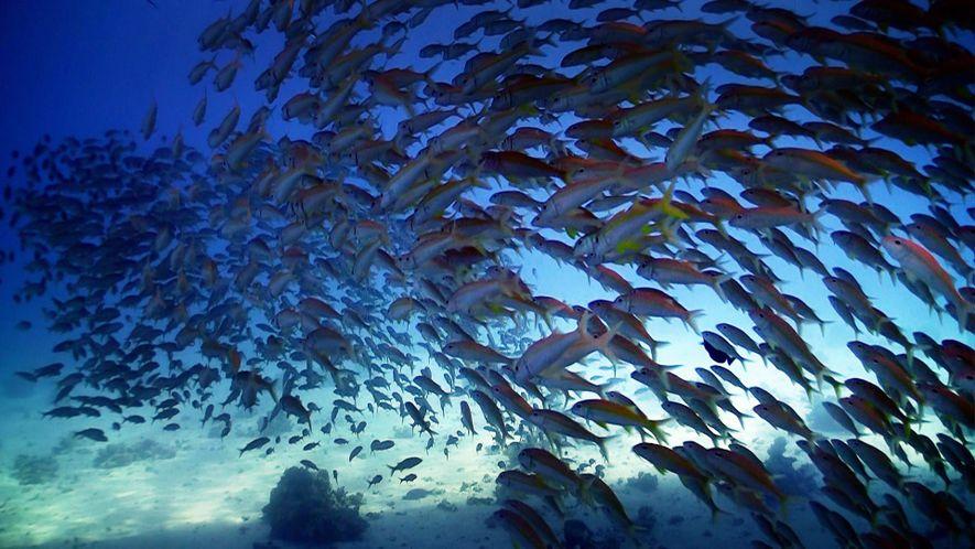 Nat Geo WILD Celebra o Dia Mundial dos Oceanos
