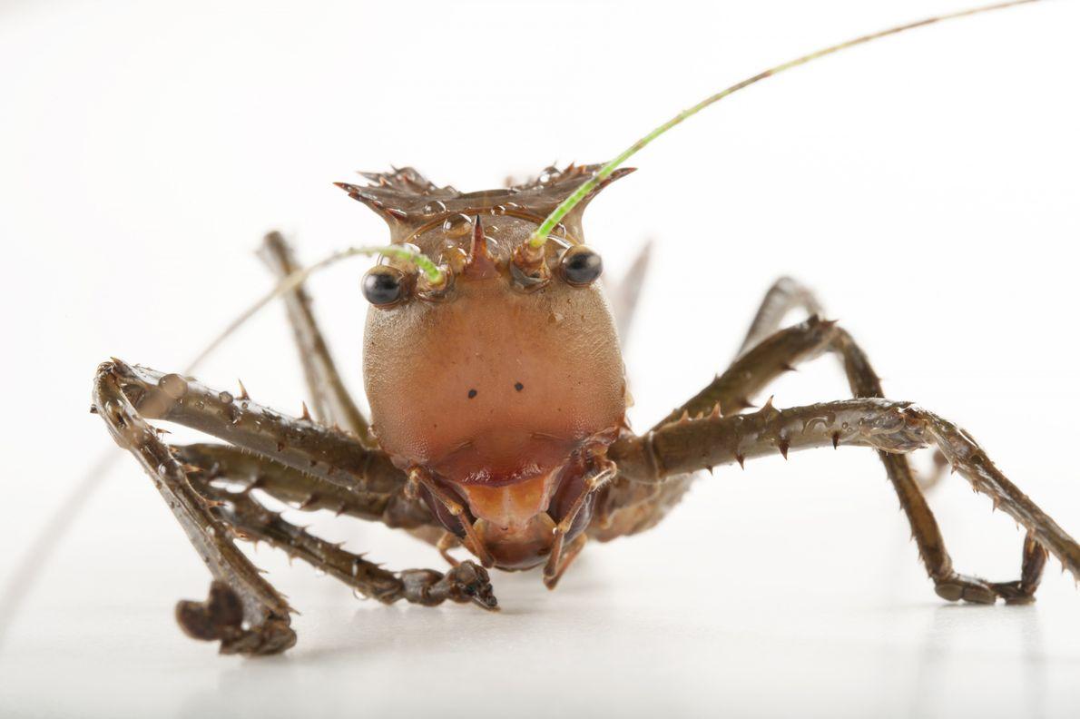 Eumegalodon Blanchardi